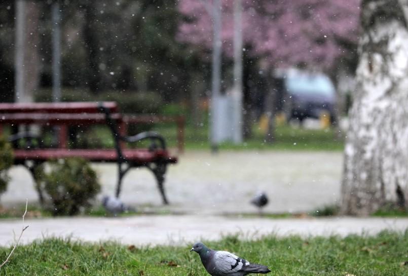 Пролетни снегулки (Галерија)