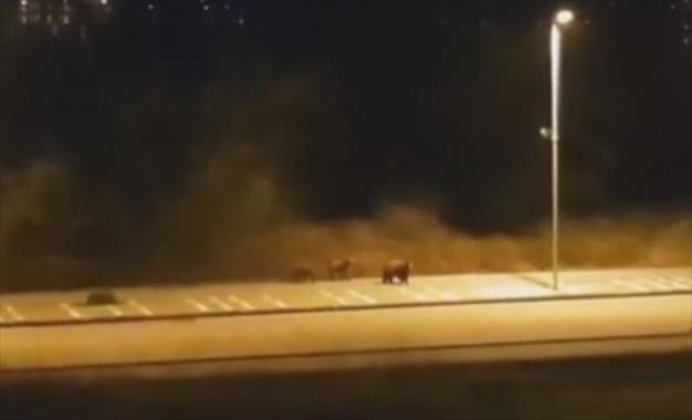 Слика од Мечка со две мали мечиња се прошета крај езерото во грчкиот град Костур