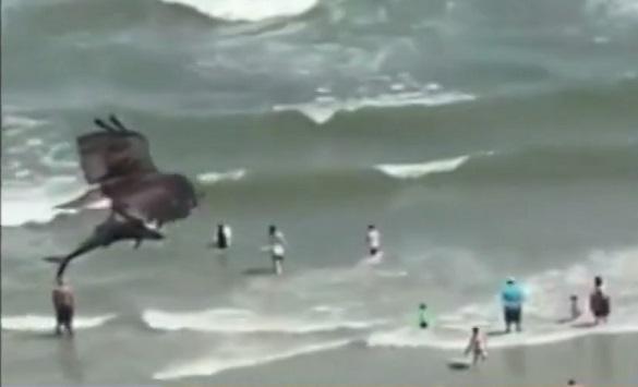 Слика од Орел улови ајкула (видео)