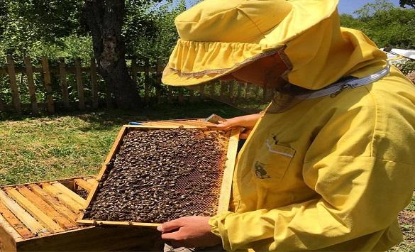 Слика од До 15 јули може да се аплицира за финансиска поддршка за набавени назимки и пчелини матици