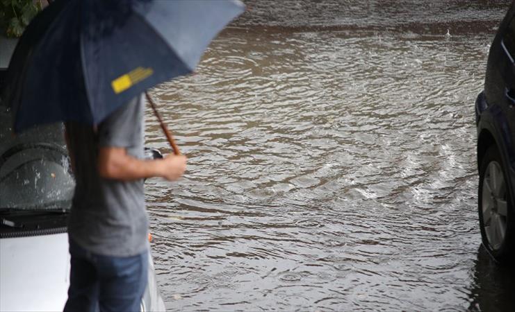 Слика од Врнежите може да предизвикаат проблеми во градските средини, велат од УХМР