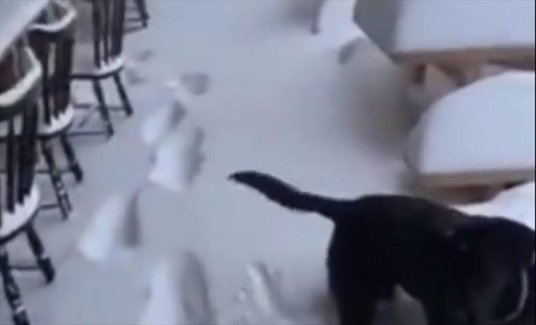 Слика од Снег во авугст во Италија и во Швајцарија