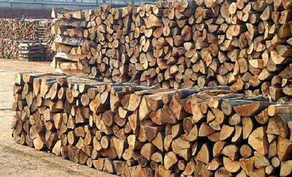 Слика од Шумското производство помало за пет отсто