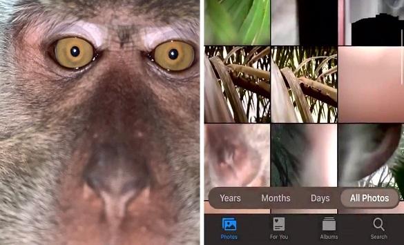 """Слика од Мајмун украл телефон и си правел """"селфи"""""""