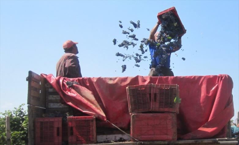 Слика од ВМРО-ДПМНЕ поднесе барање за надзорна расправа поврзана за откупната цена на грозјето