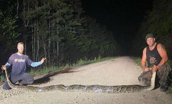 Слика од Во Флорида заловен питон долг речси шест метри