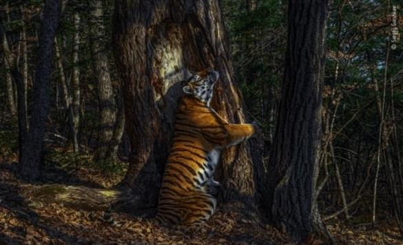 Слика од Прогласена најдобрата фотографија од дивината за годинава
