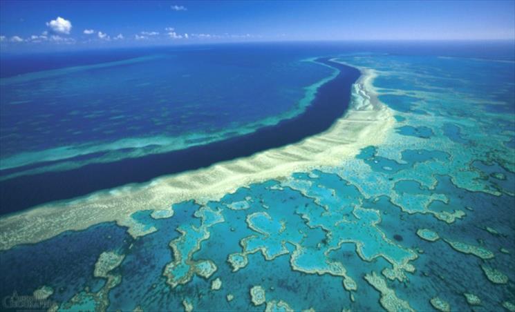 Слика од Големиот корален гребен во Австралија изгуби половина корали