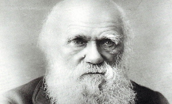 Слика од Записи на Дарвин исчезнаа од Библиотеката во Кембриџ