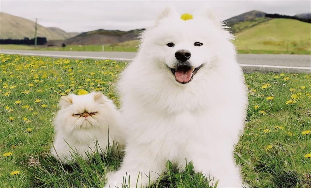 Слика од Топла приказна за намќоресто маче и весело куче