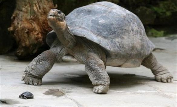Слика од Најдолговечните животни на Земјата