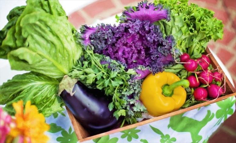 Слика од Кој витамин го успорува процесот на стареење?