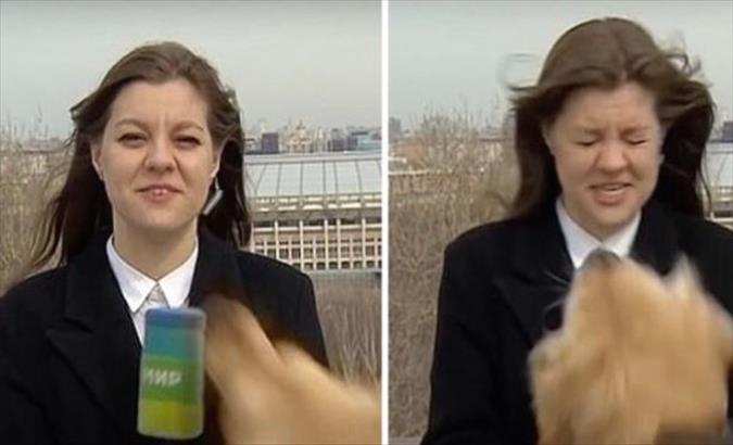 Слика од Куче ѝ го украде микрофонот на репортерката (Видео)