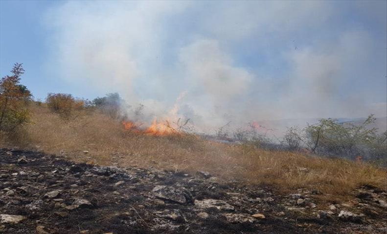 Слика од Пожар зафатил нискостеблеста и дабова шума во Арбанашко, Старо Нагоричане