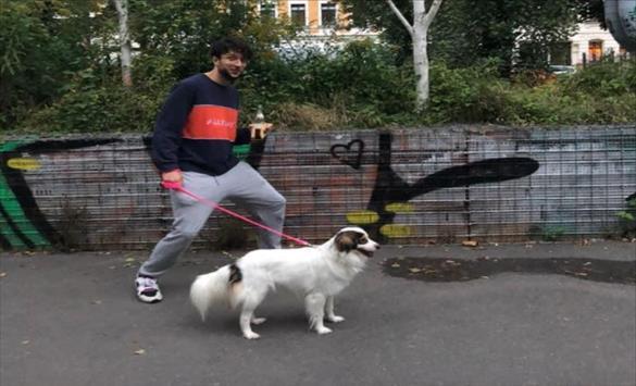 Слика од Лајка вдоми кучиња во Германија, Белгија и Шведска