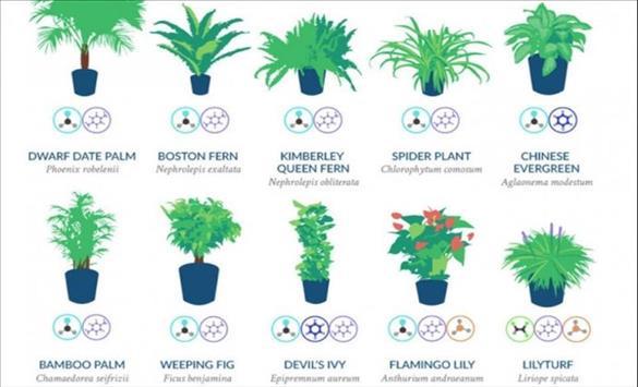 Слика од Растенија кои помагаат за природно чистење на воздухот во вашата соба