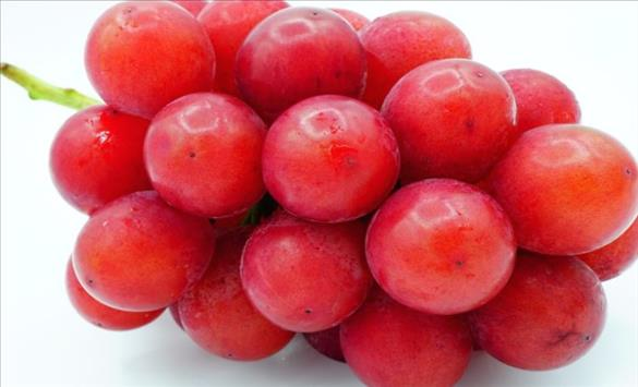 Слика од Јапонско грозје од 10.000 долари