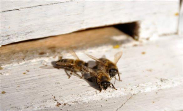 Слика од Одбележување на Светскиот ден на пчелите во Кочани