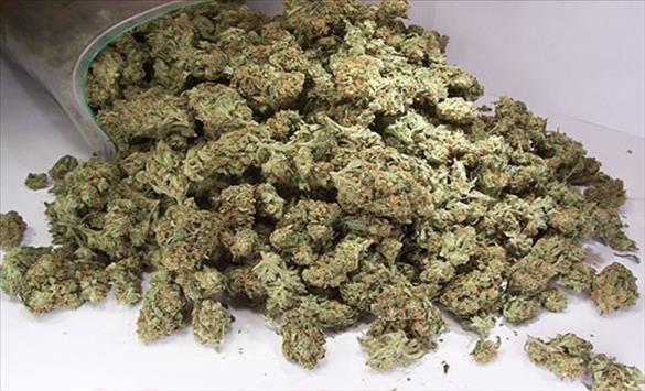 Слика од Обвинение против три лица за пронајдено поголемо количество марихуана во Гостивар